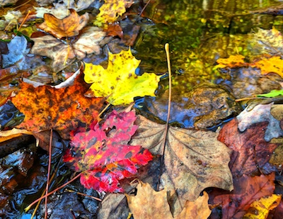 Fall Photo 1 - Nanci Goldberg